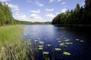 Kyrkbäcken - Foto Emil Sandqvist
